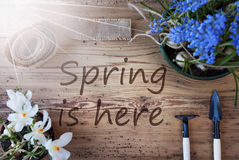 Sunny Flowers, Text Spring Is Here Stock Image