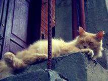 A red Persian cat rests on the stairs. Sunny fluffy cat is sleeping at the door to the house Royalty Free Stock Photo