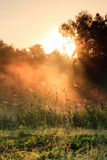 Sunny Fog. Landscape Shop on a warm morning in Bavaria, Germany, with the sun shining through the fog at a lake Stock Images