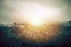 Sunny Foggy Forest Landscape stock afbeelding