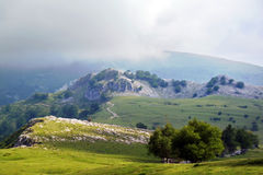 Sunny and foggy meadows Stock Photography