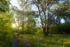 Sunny foggy morning in  forest . Stock Photo