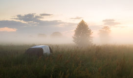 Sunny, foggy morning in the meadow Stock Images