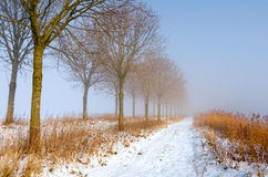 Sunny yet foggy trail in winter Stock Photo