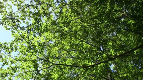 Sunny foliage stock video footage