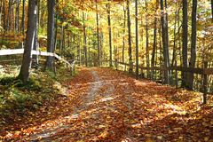 Sunny forest. Sunny nice road in the autumn forest, Germany Royalty Free Stock Photos