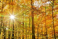 Sunny forest Royalty Free Stock Image