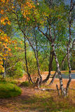 Sunny forest. Road in north sunny forest Royalty Free Stock Image