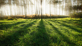Sunny Forest Royalty Free Stock Photo