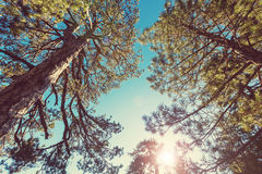 Sunny forest Stock Images