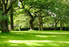 Sunny forest. Beautiful sunny forest park in the summer time Stock Photos