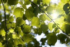 Sunny forest canopy Stock Photography
