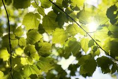 Sunny forest canopy Royalty Free Stock Photography