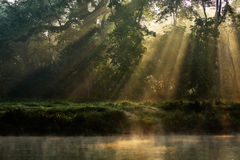 Sunny forest early in the morning Royalty Free Stock Photos