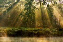 Sunny forest early in the morning Royalty Free Stock Photography