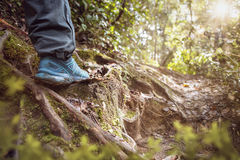 Sunny forest floor with hiking shoe Stock Photos