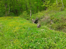 Sunny forest meadow with green grass and wildflowers. Spring nature Royalty Free Stock Photos