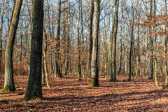 Sunny forest Royalty Free Stock Photos