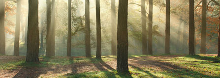 Sunny forest panorama Royalty Free Stock Photos