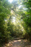 Sunny forest path Stock Photography