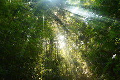 Sunny forest path Royalty Free Stock Photography