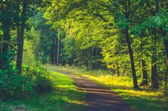 Sunny forest. Stock Photo