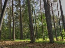 Sunny forest. Photo shows sunny forest Royalty Free Stock Photos