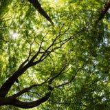 Sunny Forest Rays der Sonne, die durch das üppige Laub bricht stockfotos