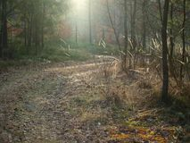 Sunny forest road, south Bohemia. Czech Republic Stock Photography