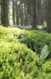 Sunny forest scenery Stock Images