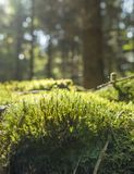 Sunny forest scenery Royalty Free Stock Photos