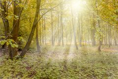 Sunny forest with sun rays. In spring colors Stock Photo