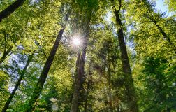 Sunny forest with sun rays stock photography