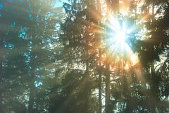 Sunny forest Stock Image