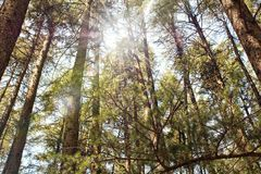 Sunny forest. In the spring Royalty Free Stock Photography