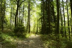Sunny forest Stock Photos