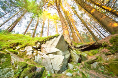 Sunny forest. Wide-angle photo Stock Image