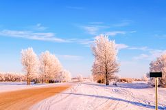 Sunny frosty day on a country road with a snov-covered trees stock photography