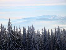 Sunny frosty morning in the winter mountains stock images