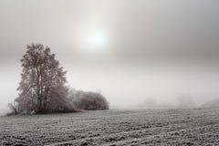 Sunny frozen misty landscape Stock Photo