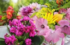 Sunny garden flower arrangement stock photography