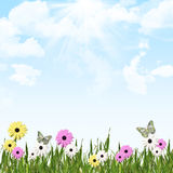 Sunny Garden Flowers. Blue sky and cloud background with grass and flower border Royalty Free Stock Image