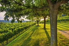 Sunny garden and vineyards. Vibrant landscape royalty free stock images