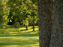 Sunny glade in the park Royalty Free Stock Images