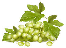 Sunny grape. Green grapes with leaves. Royalty Free Stock Photos