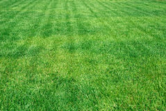 Sunny grass. Lawn a bright juicy green grass Royalty Free Stock Photos