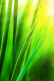 Sunny grass Stock Image