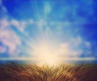 Sunny Grass Field Immagini Stock
