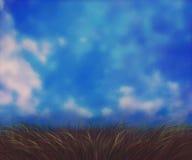 Sunny Grass Field Arkivbilder