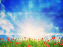 Sunny Grass Field Royaltyfria Bilder